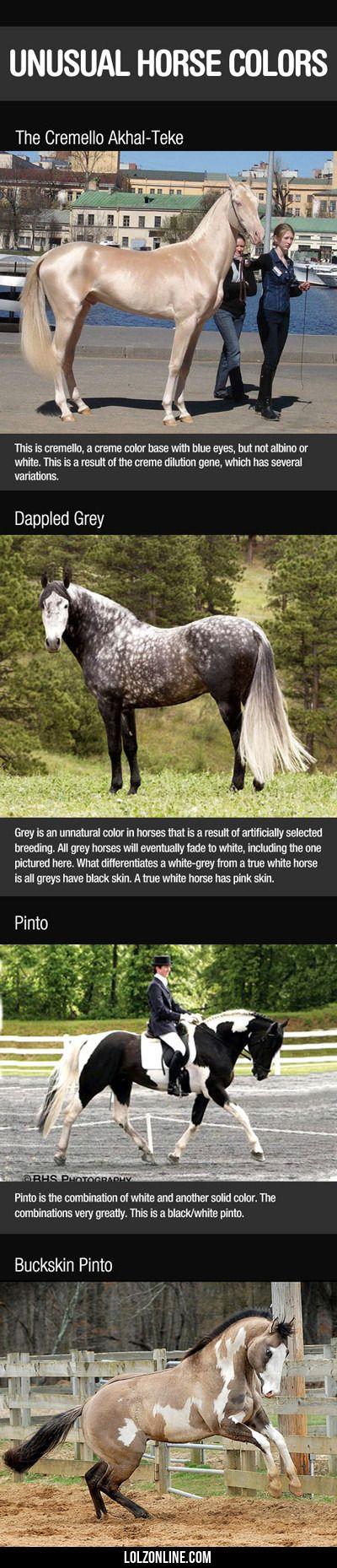 Unusual Horse Colors...