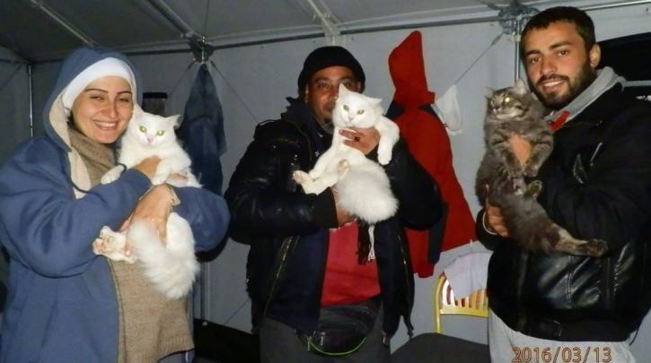 Εφόδια για τις γάτες των προσφύγων που βρίσκονται στην #Idomeni :: left.gr