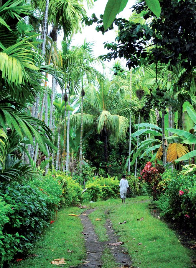A palm-shrouded footpath on Kranget Island, two kilometers offshore from Madang town.