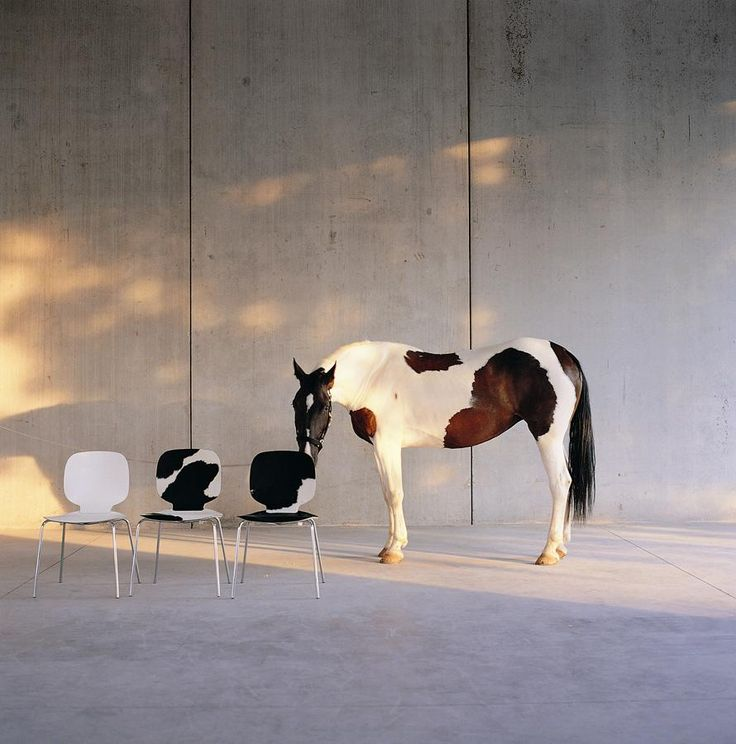 ALIS #chair designed for @Crassevig Chairs   #Palomba #design