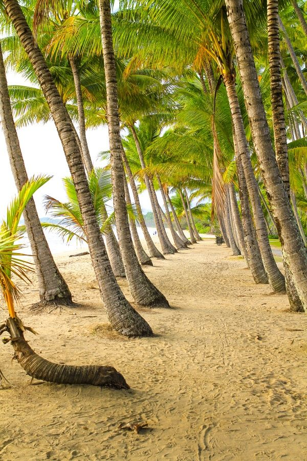 Walking between the palm trees... Palm Cove ~ Tropical North Queensland ~ Australia