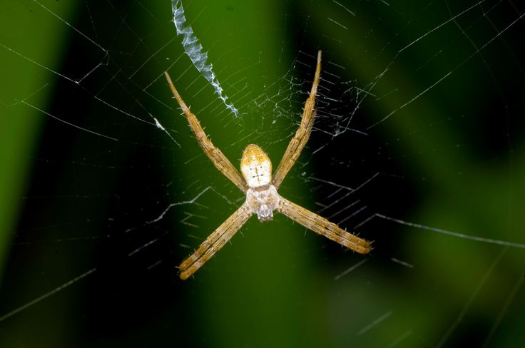 """""""Perfect conditions"""" mean more arachnids in the Sydney area."""