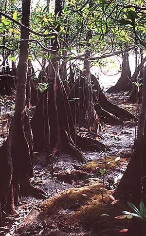 Parque Nacional Natural Utría. Chocó, Colombia.
