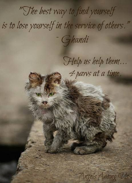 One little action can change a cat's life forever...