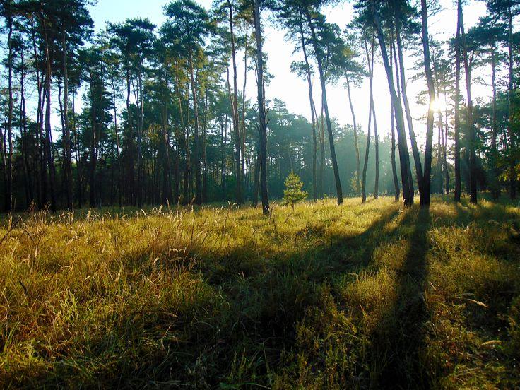 УТРО,солнце,лес