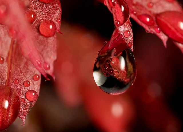 Red water drop