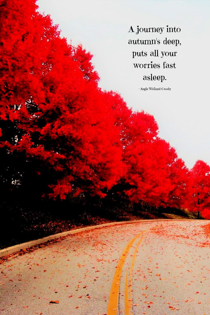 A Soulful Quote With Trees In Autumn Quotes Autumn Fall