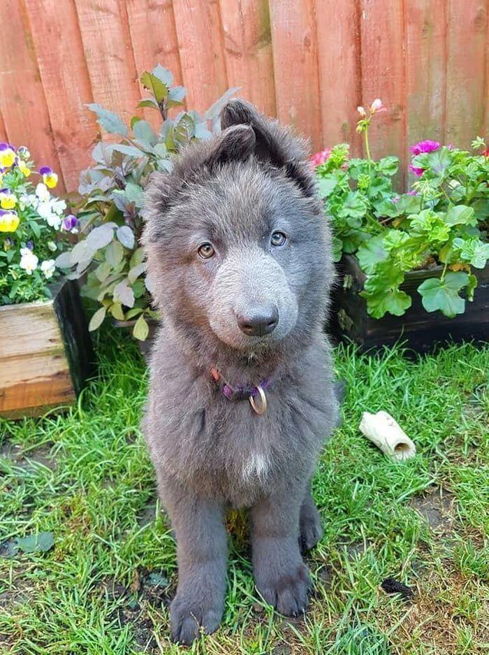 Cutestdogever Dogsrule Dogchild Bostonterrierpuppy Aww