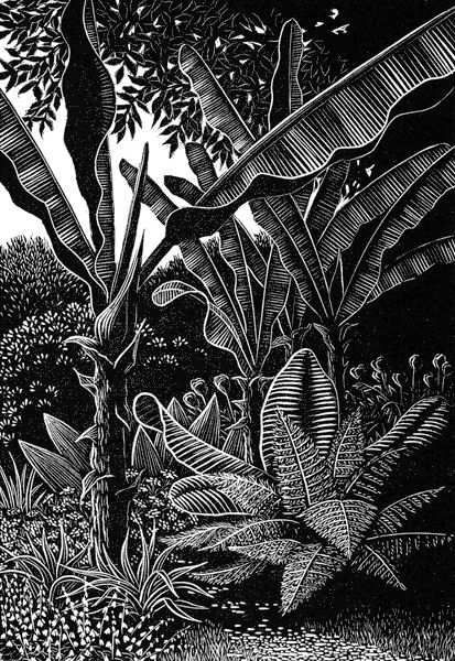 Sheila Watkins - Bananas at Overbecks - woodcut