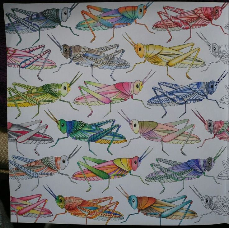 Image result for animal kingdom colouring book grasshoppers