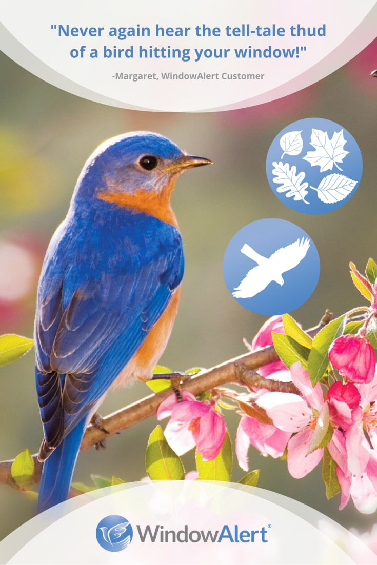 Stop wild birds from flying into your windows with WindowAlert: Ultraviolet (UV) decals that glow like a stoplight for birds, helping them to better see your windows and avoid striking the glass. Browse our complete selection of decals at WindowAlert.com.