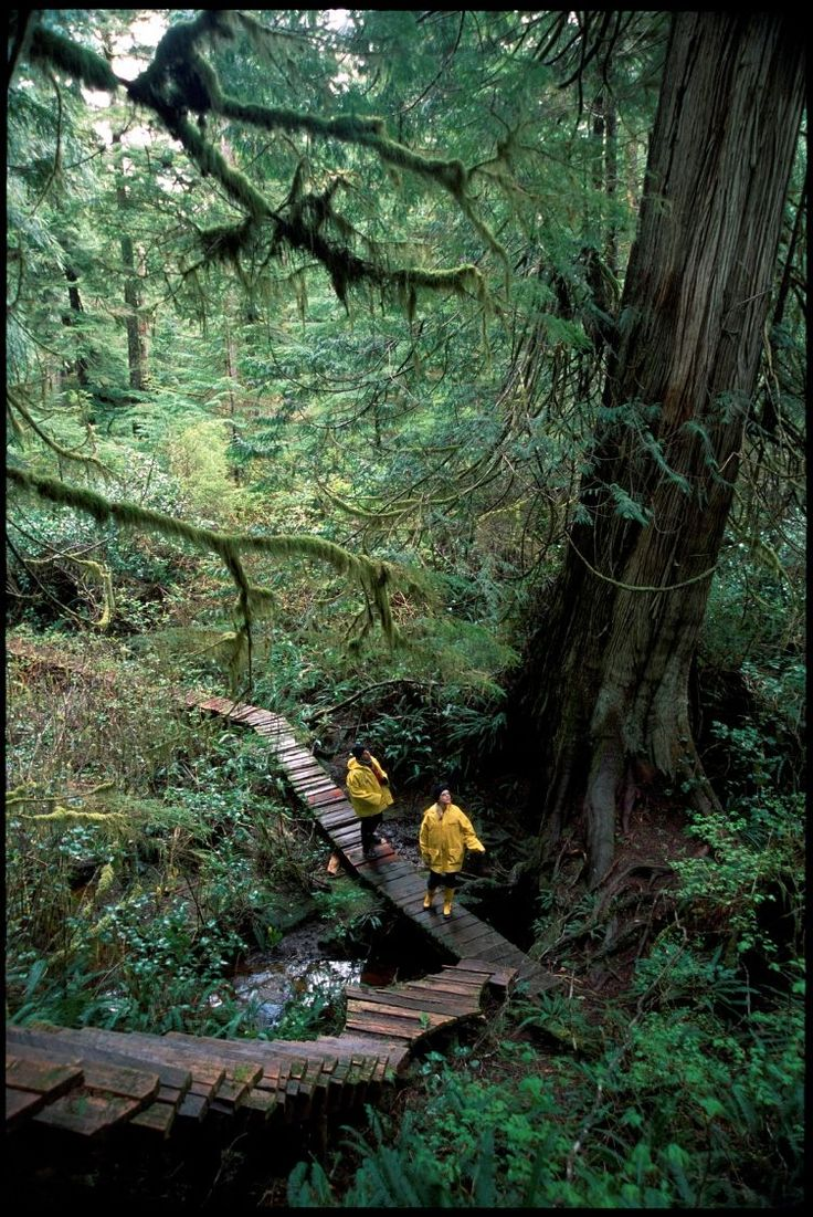 Rainforest on Meares Island near Tofino, British Columbia, Canada. Tourism BC/Tom Ryan photo