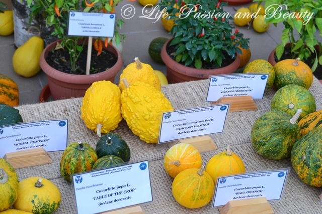 Life, passion and beauty: Pictures: Expozitia de flori, fructe si seminte