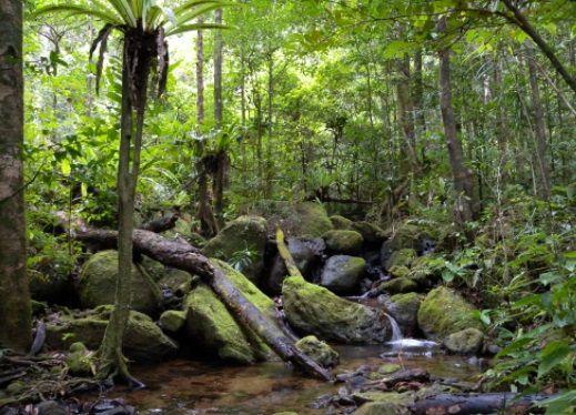 La flora y fauna de la selva tropical exhiben una gran diversidad de especies. Este bioma se puede describir como una jungla alta y densa que recibe gran cantidad de lluvia por año.