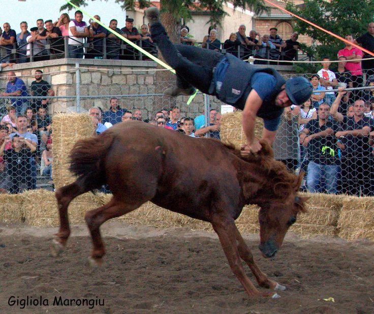 Spettacoli di Sardegna. Un rodeo con i cavalli selvatici.....
