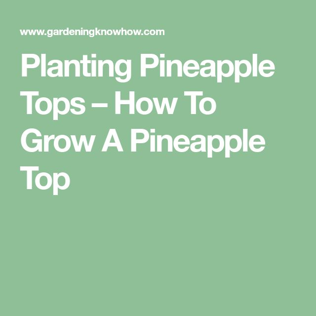 Planting Pineapple Tops – How To Grow A Pineapple Top