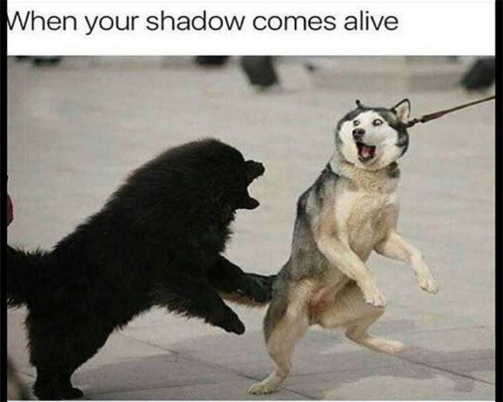 Funny Memes For A Bad Day : Best dog memes images