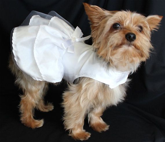 Wedding Dresses For Dogs Great Ideas For Fashion Dresses