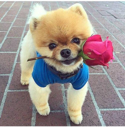 A Single Rose....Gift for You.ºHOLA BUEN DIA !!!EXCELENTE SEMANA PARA TODOS!!!!TE REGALO LA ROSA DE LA PAZ...CON AMOR.-
