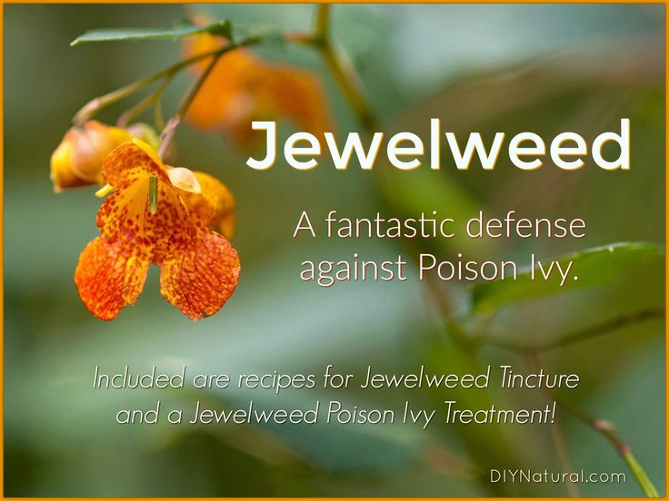 Jewelweed is a wild plant very useful in treating poison ivy. Learn more about the plant, where/when it grows, and enjoy our Jewelweed poison ivy treatment.