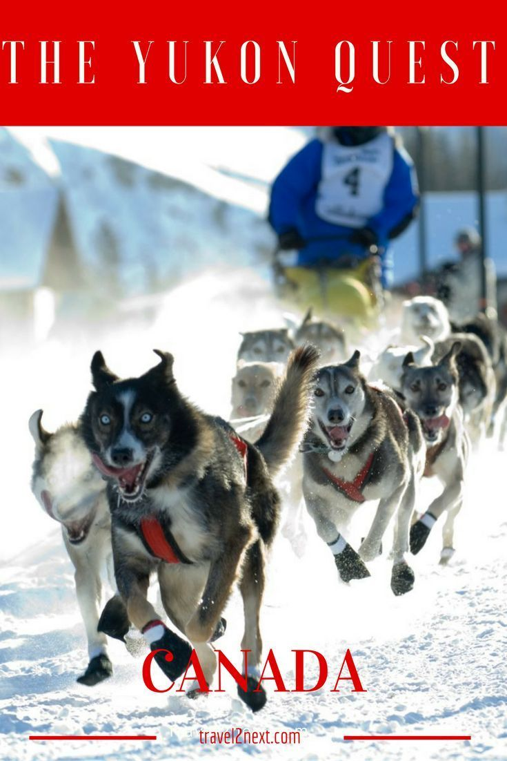 The Yukon Quest, or simply the quest, as it is affectionately referred to by the close-knit dog mushing fraternity, is a 1651km marathon dog-sled race along old fur trading routes from Fairbanks in Alaska, through remote and god-forsaken country and fin