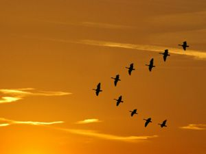 geese flying in v formation - Google Search