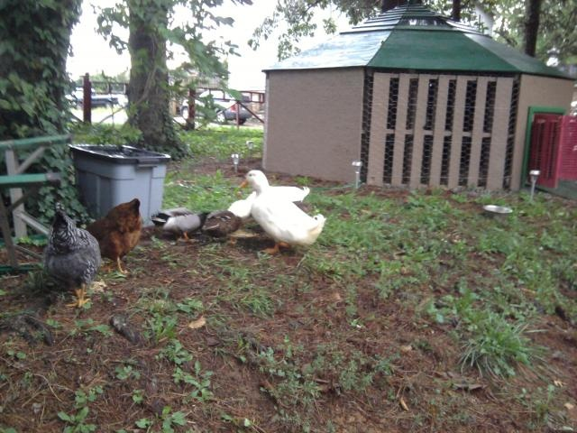 Duck house made with pallets diy animal plant shelters for Building a duck house shelter