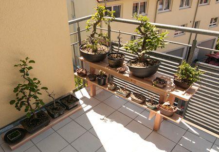 bonsai auf einem bonsairegal bonsai b ume pinterest. Black Bedroom Furniture Sets. Home Design Ideas