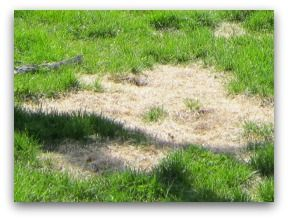 Lawn Problems. Fix your lawn problems properly by understanding why you have them in the first place, and what's the best fix for your budget.