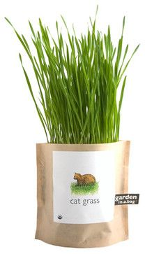 Garden in a Bag: Cat Grass - contemporary - pet accessories - - by Branch