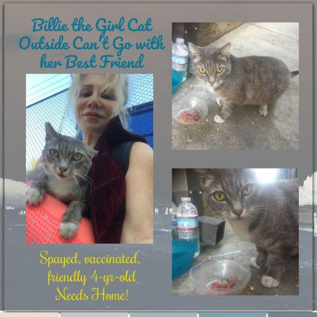 Losangeles Urgent Sweet Loving Beautiful Billie The Cat Needs