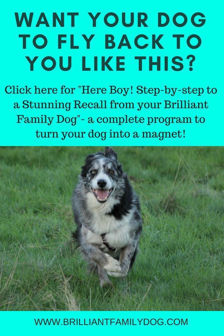 Enthusiastic Critiqued Best Dog Training Tricks This Link Dog Recall Training Dog Recall Dog Training Obedience