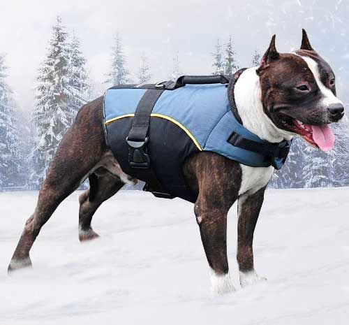 #Pitbull #Winter #Coat $49.90 | all-about-cane-corso-dog ...