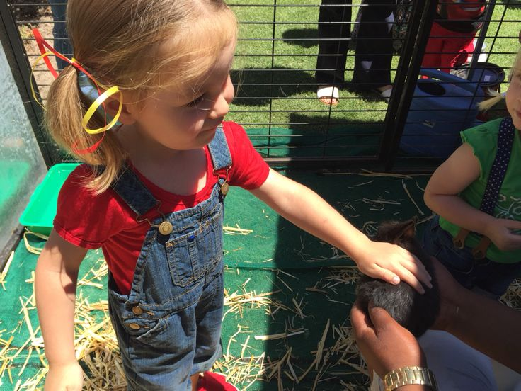 Lex's petting farm for the Barnyard Party