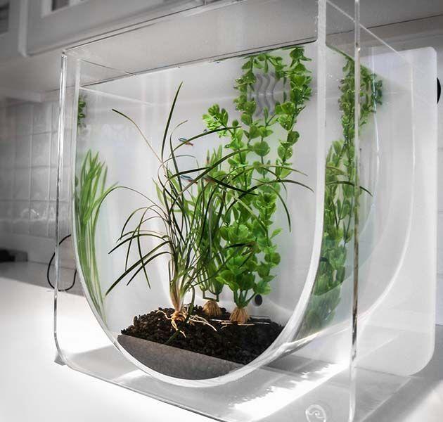 Fancy Fish Tanks 97 best aquariums images on pinterest   aquarium ideas, fish