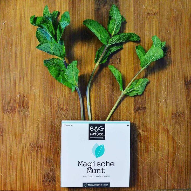 It's kind of magic!! #magic #mint #spring #herbs #greens