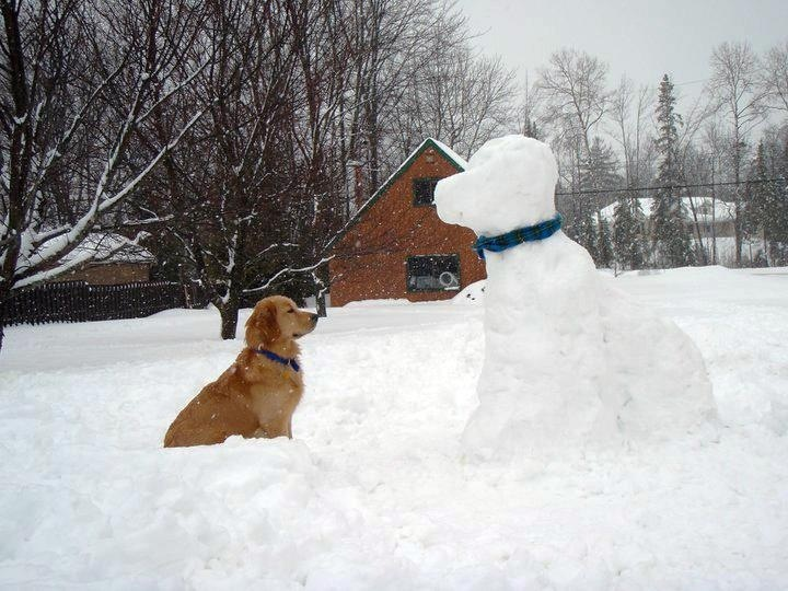 Image result for site:pinterest.com dog and snowman