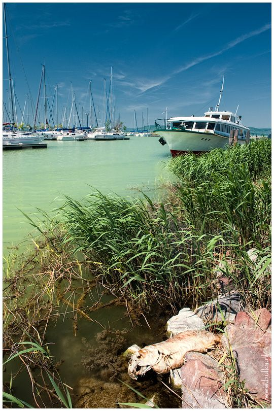 Balaton, Hungary Today's travel destination!