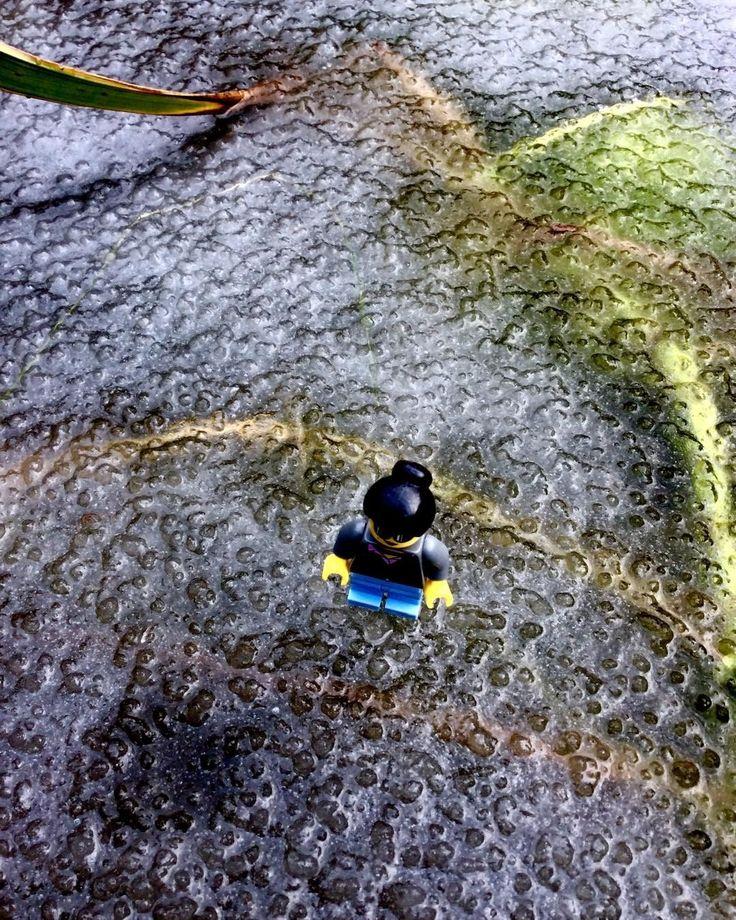 Mein #Lego #Avatar auf dem #Eis im #Teich Mi avatar de Lego sobre el #hielo en la #pileta #invierno #winter #frío
