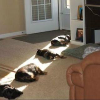 Optimizing sunshine!Lights, Cat, Funny Dogs, Sun Ray, Pets, House, Sunlight, So Funny, Animal