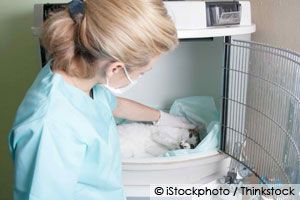 The risks of anesthesia during and after pet surgery can be avoided with proper planning, monitoring during the procedure, and aftercare. http://healthypets.mercola.com/sites/healthypets/archive/2011/09/08/when-pet-go-under-anesthesia.aspx