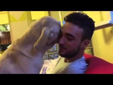 [Watch Video] Cute Labrador Desperately Begs For Forgiveness