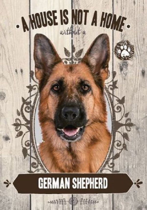 German Shepherd A House Is Not A Home German Shepherd Dogs