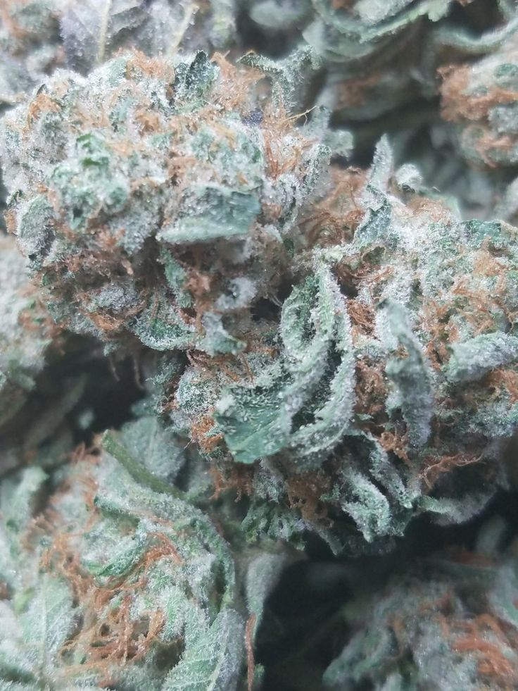 #FireAlienKush this #Strain is used for patients with #depression #nausea #headaches #pain and #insomnia . #Kush #Weed #Fire #Dank #tasty #Buds #loud #medicine #MedicalMarijuana #Cannabis #Cannabiscures #cannabiscommunity #Clio #Michigan #MMMP #like #comment #share #thoughts #please #Blessed