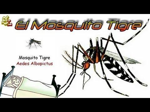 Los Mosquitos Tigre - Trampas para Mosquitos - Cómo Evitar las Picaduras de los Mosquitos - YouTube