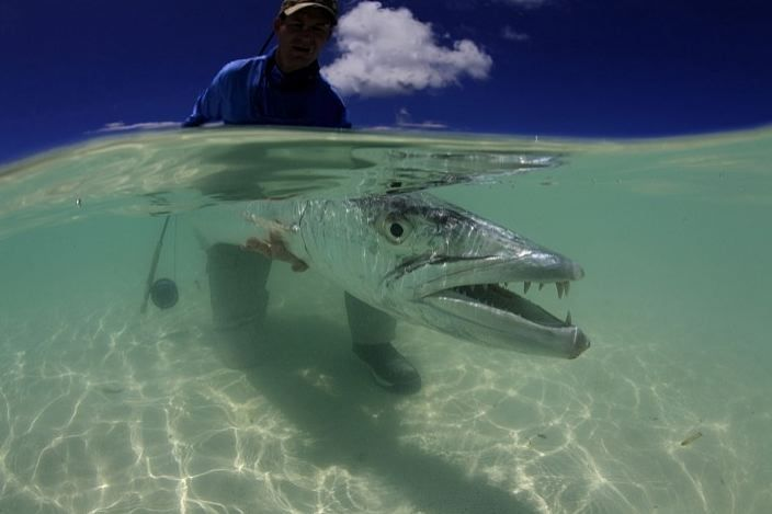 1000 images about barracuda on pinterest the fly photo for Fly fishing podcast
