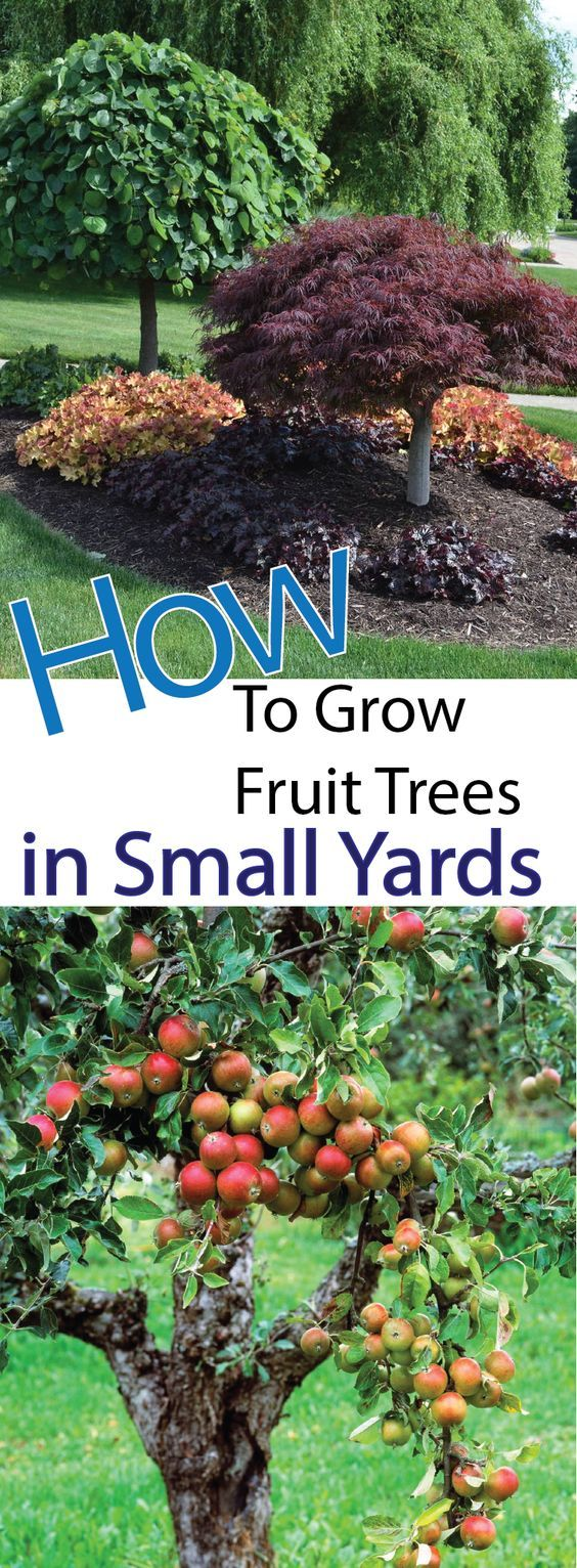 4 Ways To Grow Fruit Trees In Small Yards – Making DIY Fun
