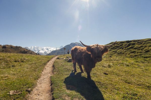 Piz Bernina, Pontresina, Oberengadin, Engadin, Graubünden, Schw