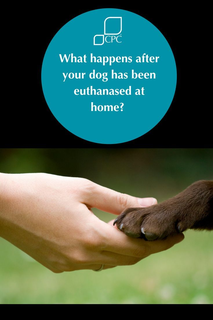 Pet Home Euthanasia A Final Goodbye In Familiar Surroundings Pet Cremation Pet Poems Pet Bereavement