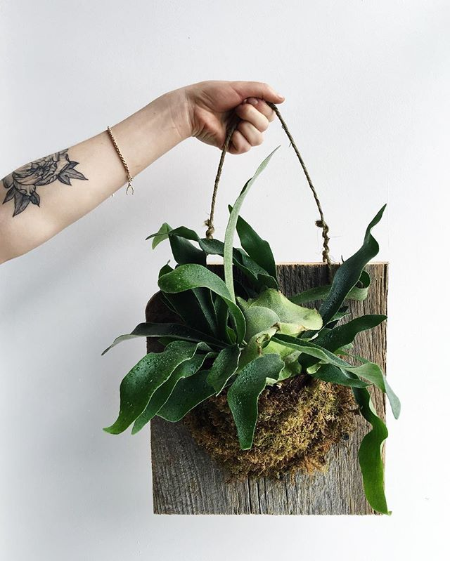 We are so excited to announce our NEW Spring workshop on Sunday April 3  Join us as we will be mounting Stag horn ferns and learn about care  Book your spot online now and see you in April  #crownfloraworkshop #staghorn #workshop
